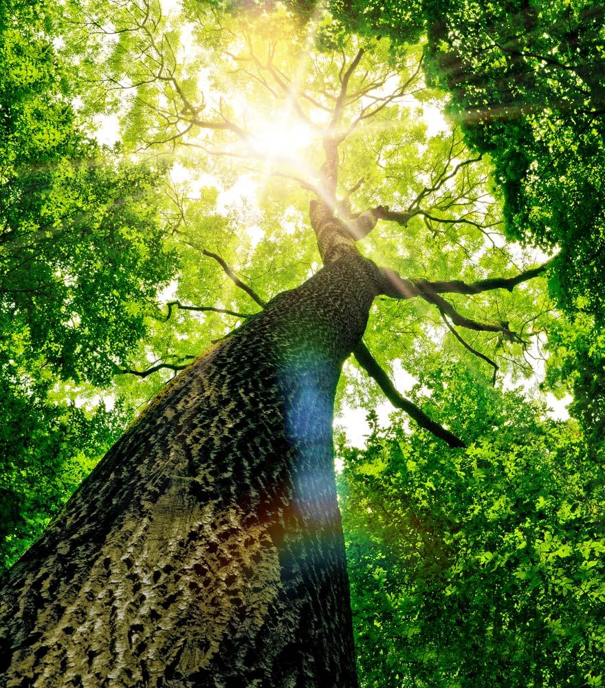 Planetair – Crédits-carbone – Qu'est-ce que c'est